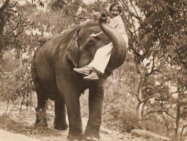 elefant gentleman