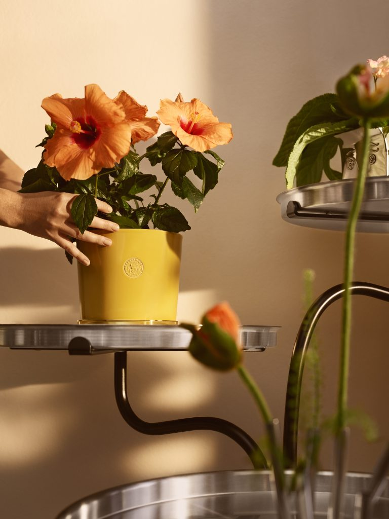 svenskt tenn Japanese magnolia GP & J Baker