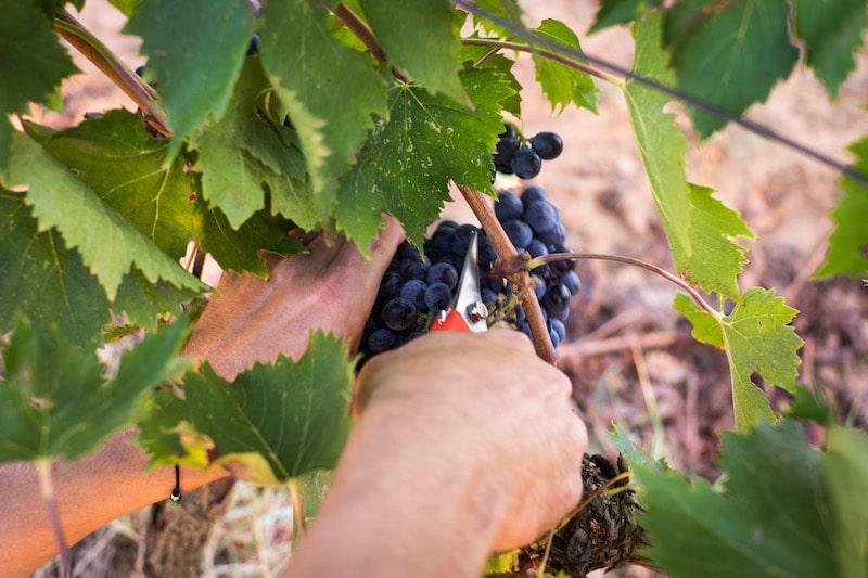 svensktillverkat vin högberga gård 2020