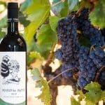 Sveriges första toscanska vinfabrik lanserar egentillverkat naturvin