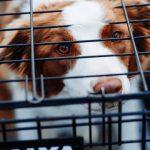 Vad du bör tänka på vid köp av hundbur