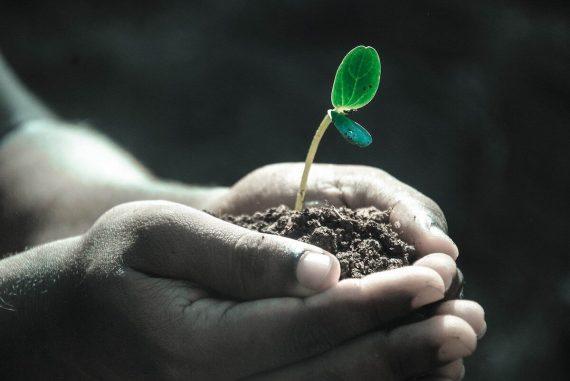 tillväxtföretag entreprenörer