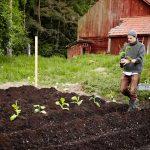 Intresset för att odla tobak till eget snus större än någonsin
