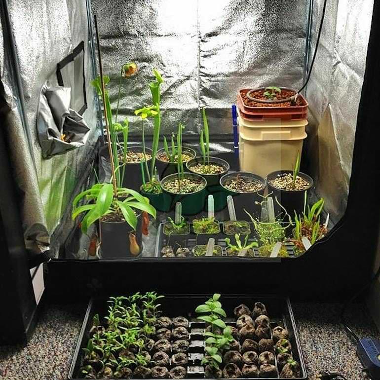 växttält