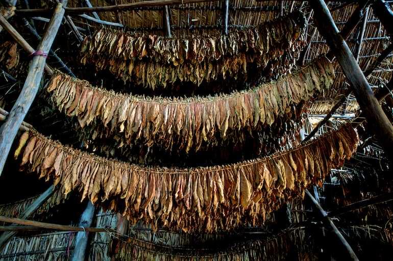 nytt snus med äkta tobakssmak general harvest